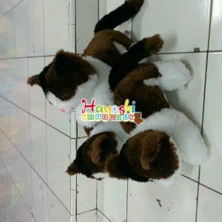 kucing m
